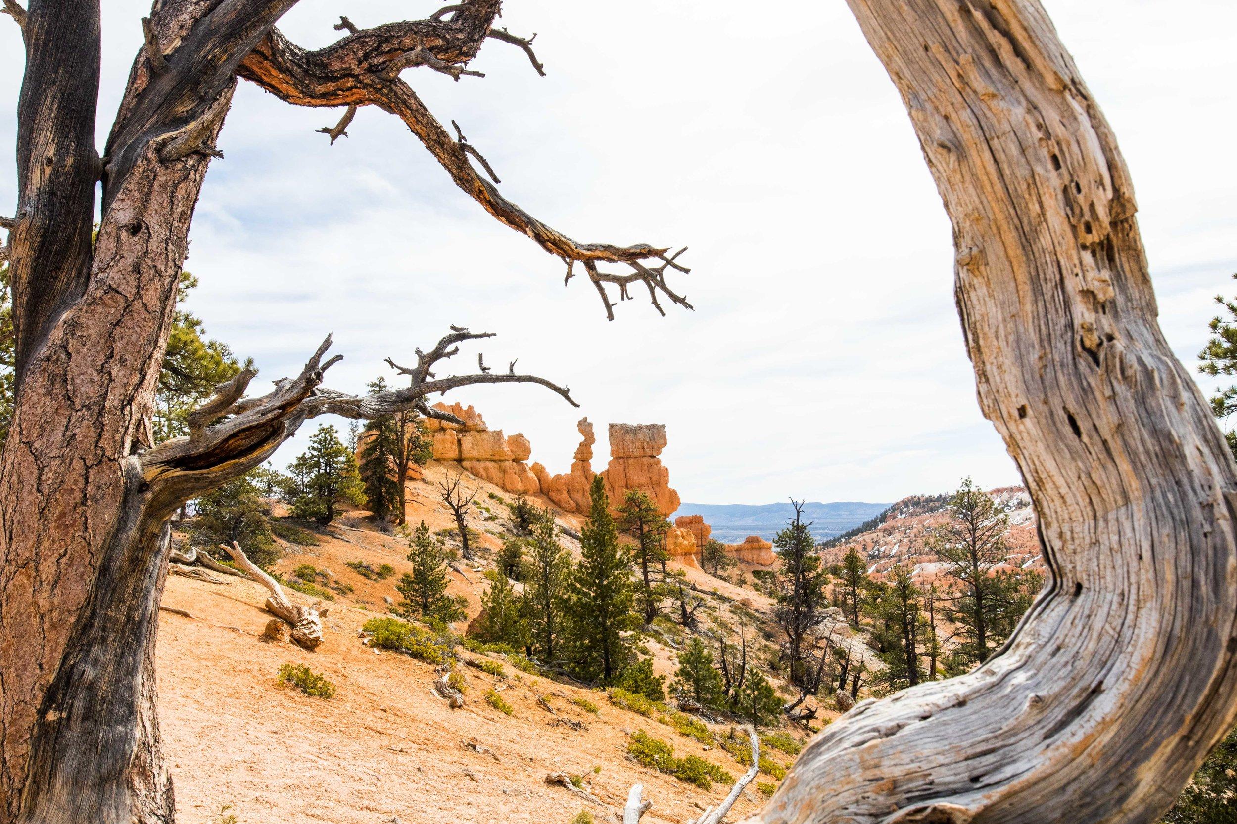 2019_Bryce_Canyon-275.jpg