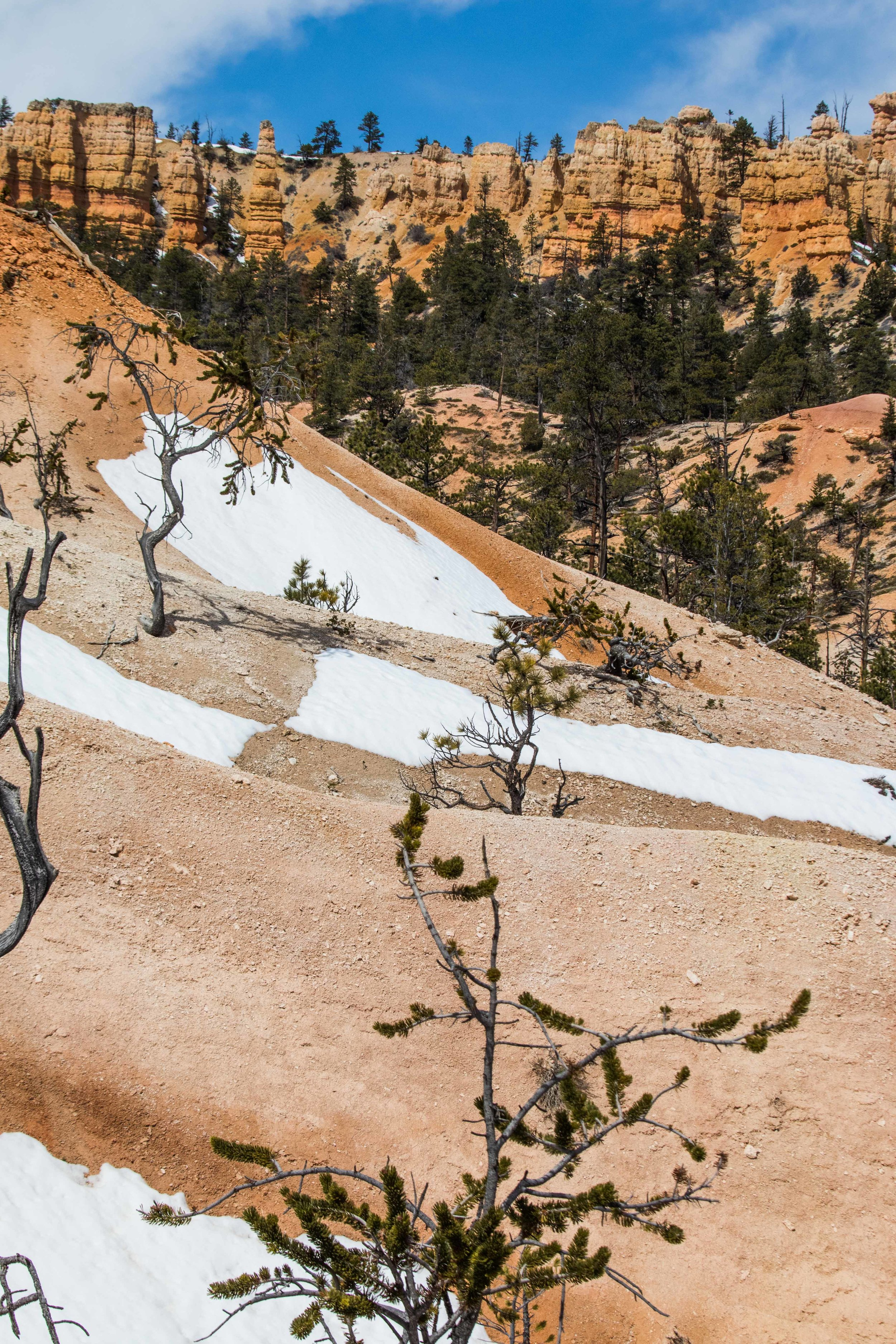 2019_Bryce_Canyon-305.jpg