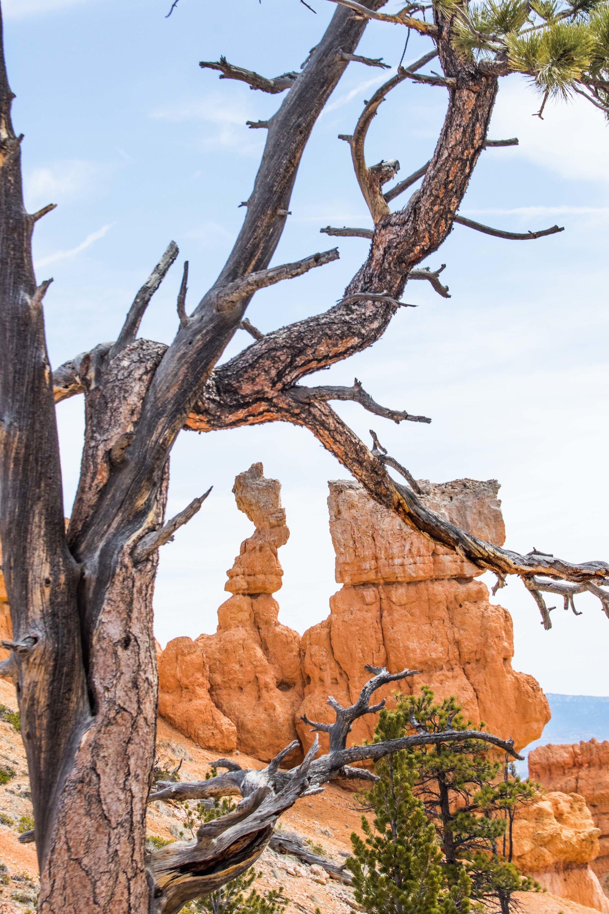 2019_Bryce_Canyon-311.jpg