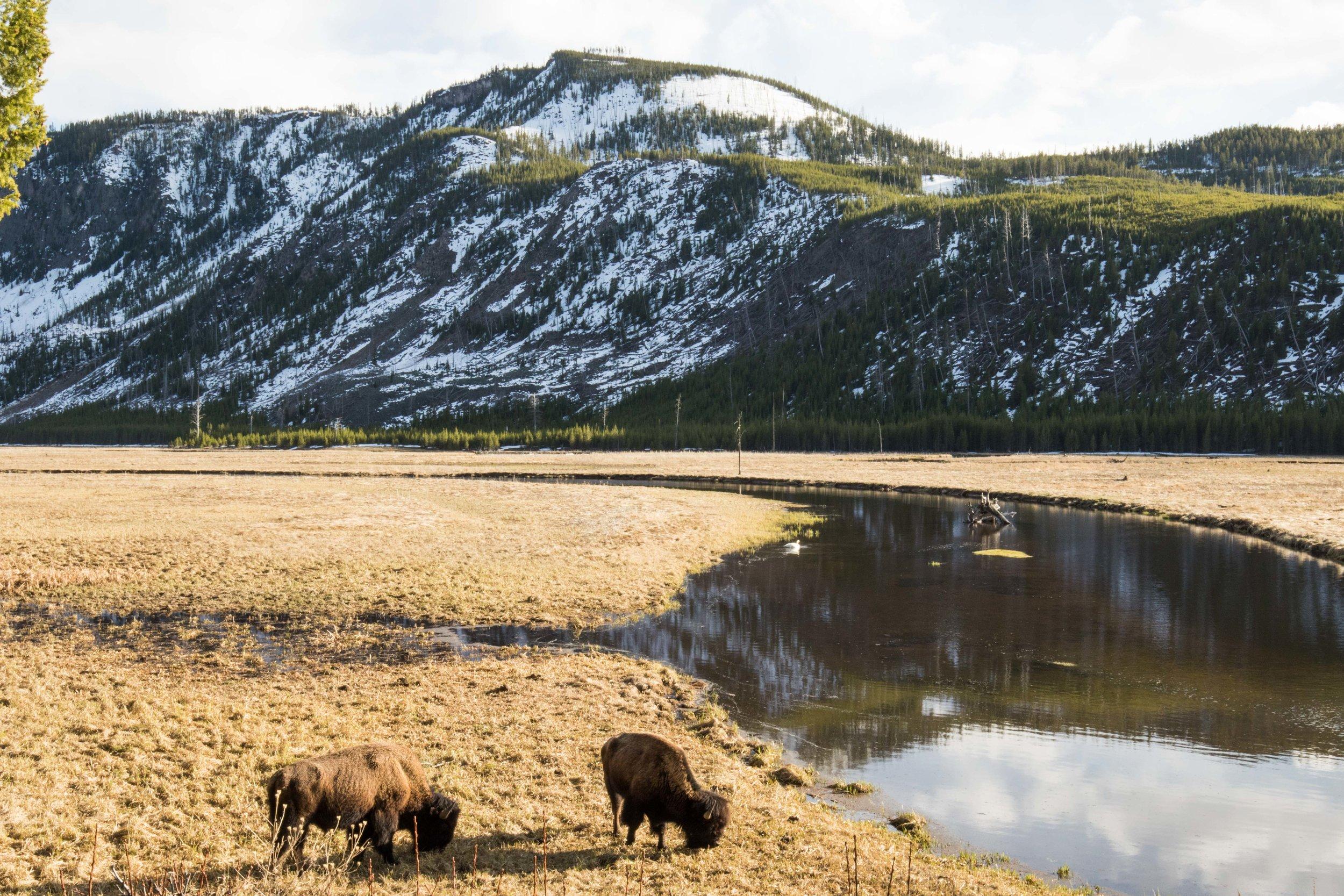 2019_Yellowstone-405.jpg