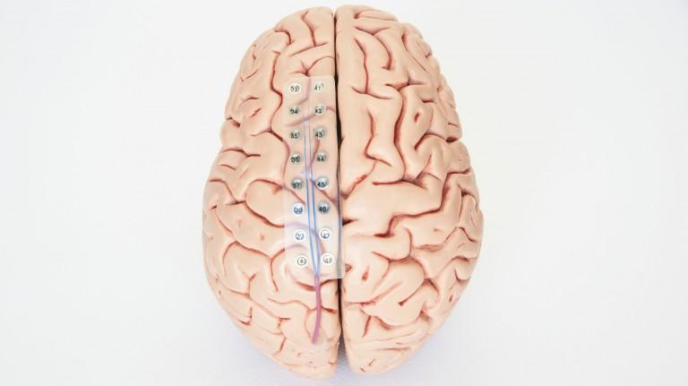 brain-deep-learning-ai
