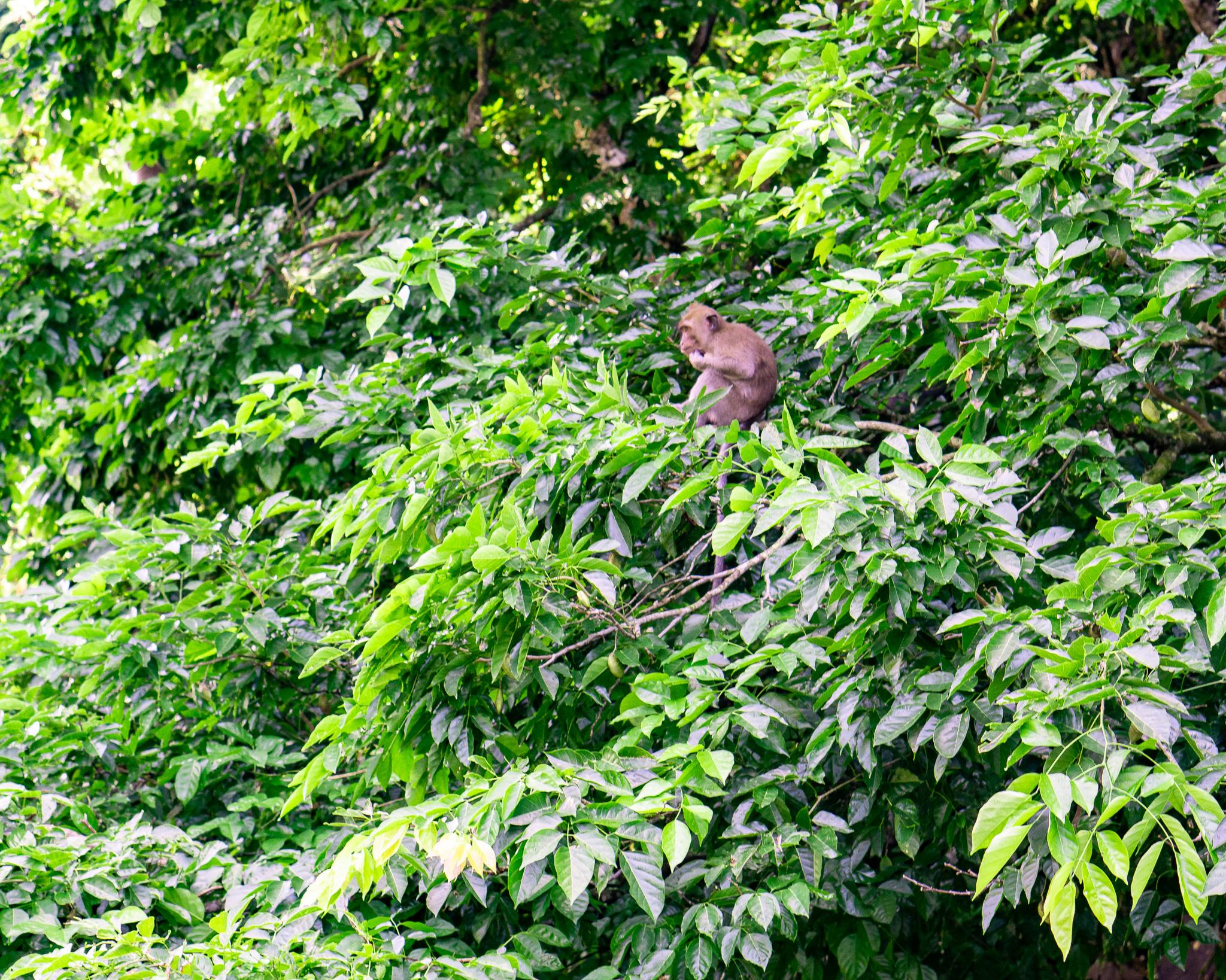 Monkeys in Grand River South East Waterfall
