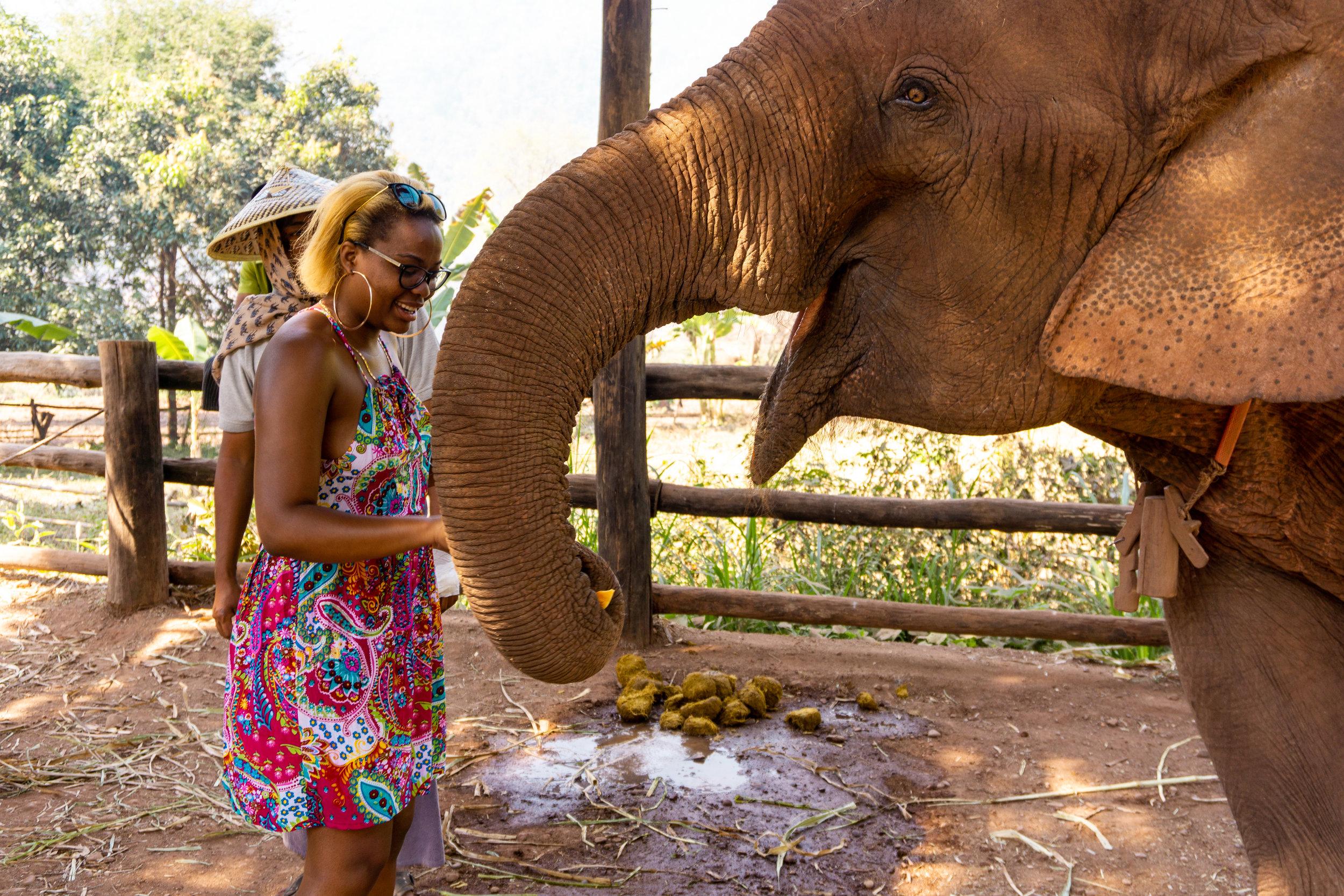 Green Hill Valley Elephant Sanctuary