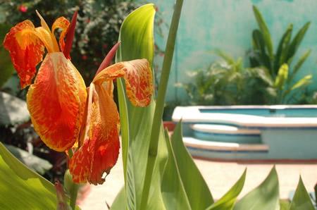 DavesHouse_flowersmall.JPG