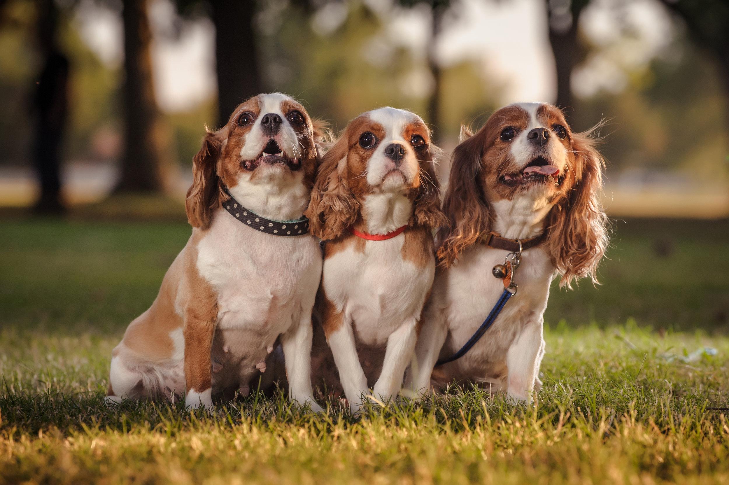 okc-pet-photographer-family-dog-puppies.jpg