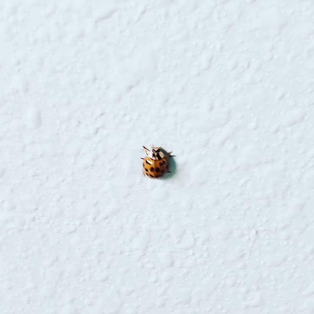 Walked into my bathroom this morning to find this little guy crawling up the wall...I'm taking it as a good omen for the year to come. May you find magic in the day to day this year and abundant signs of goodness and love.  #happynewyear  #bestillandknow  #ladybug🐞