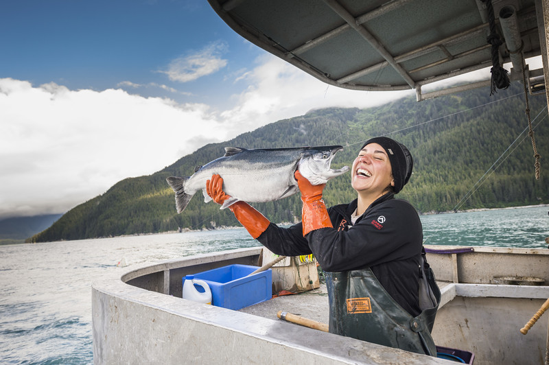 Fisherman Laughs With Troll Caught Salmon: Photo Courtesy of Alaska Seafood