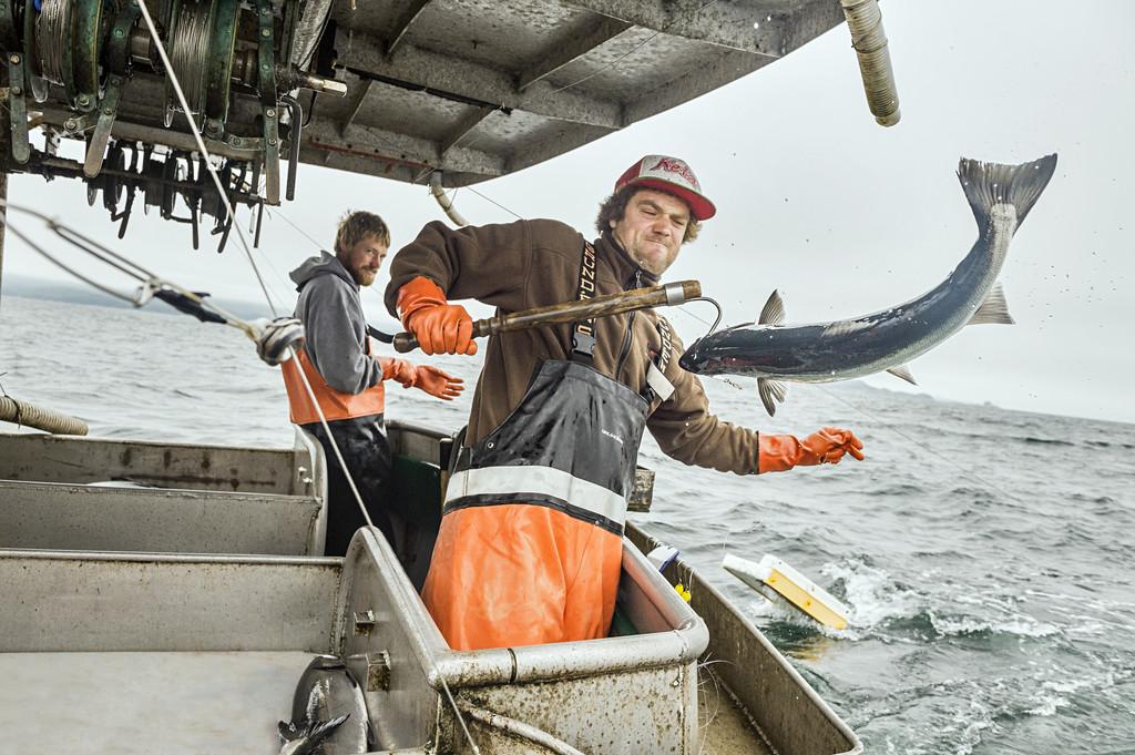 Wild Salmon Harvest In Action: Photo Courtesy Of Alaska Seafood