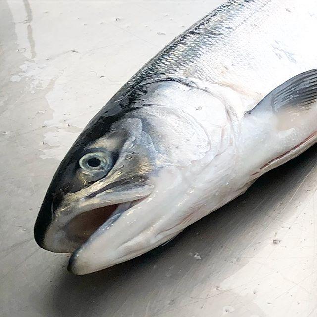 #LineCaught #Sockeye fresh off the boat! #fvsanctuary #knowyourfisherman #alaskansalmon #alaskatotexas #austineats #atxfoodie #keepaustinketo
