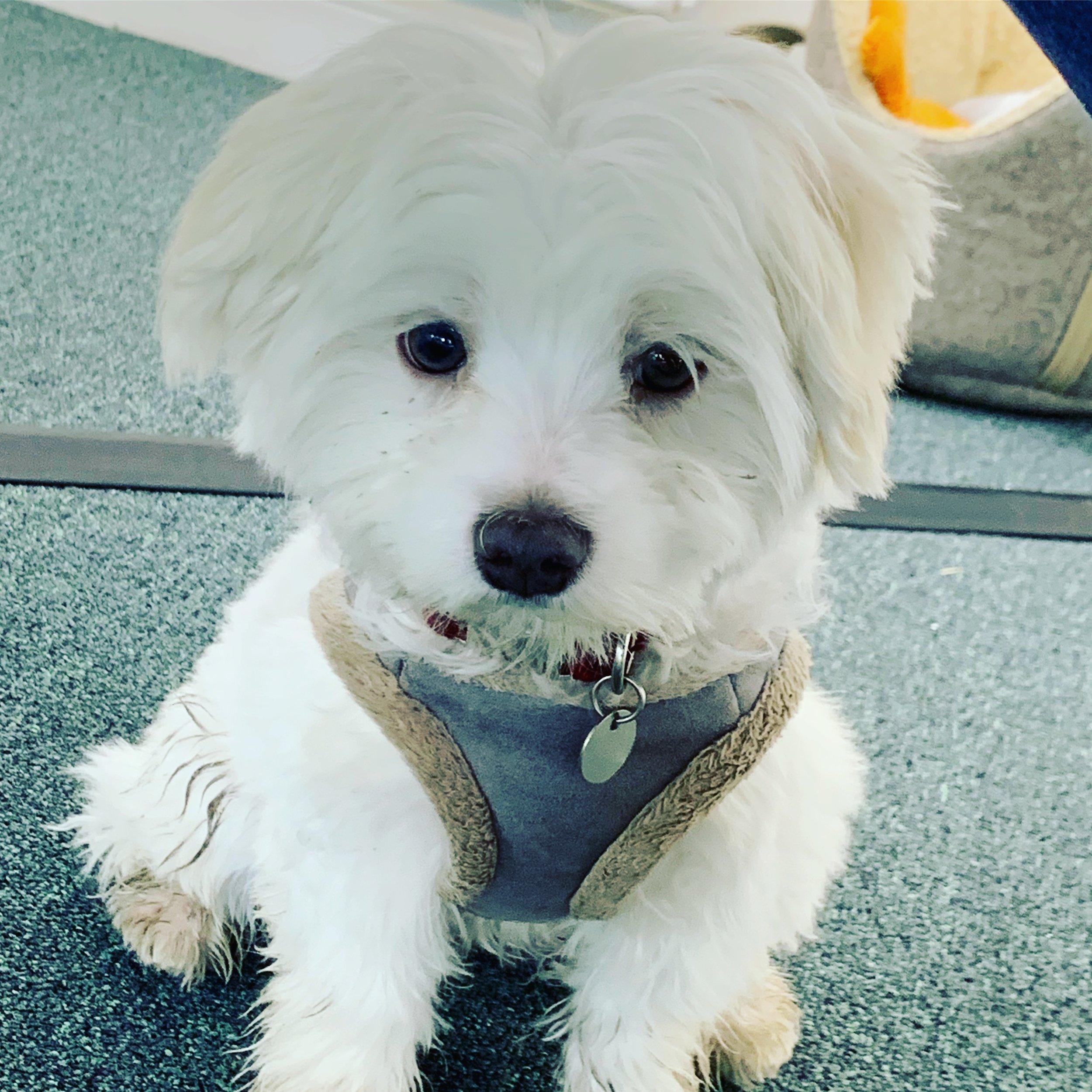 Ollie  Woof Dog