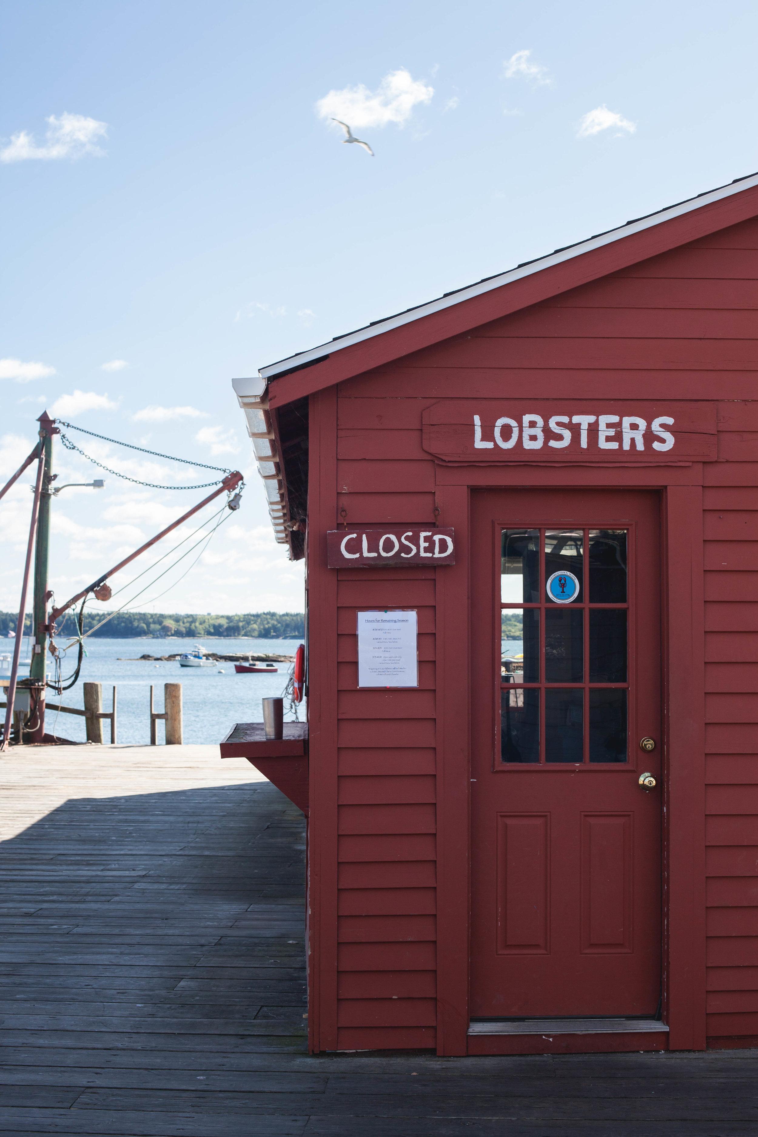 Five Islands lobster