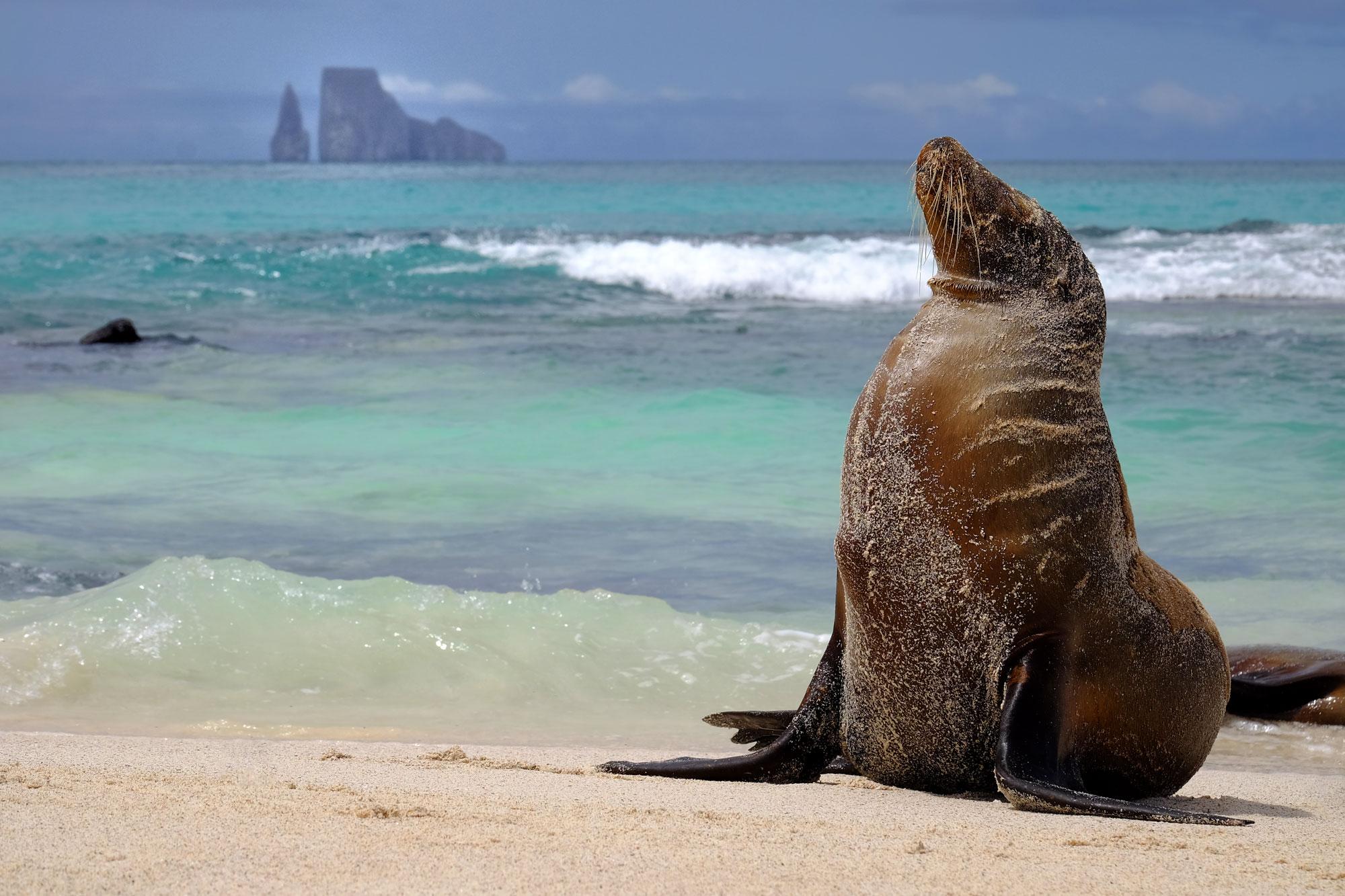For-Web-large-sea-lion-and-kicker-rock-header-copy.jpg