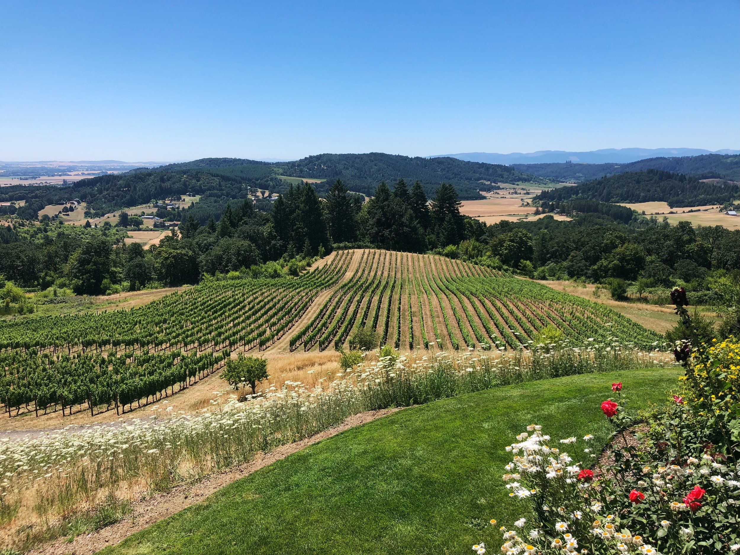 THE JOURNAL'S TRAVEL GUIDE: - NAPA VALLEY, CA