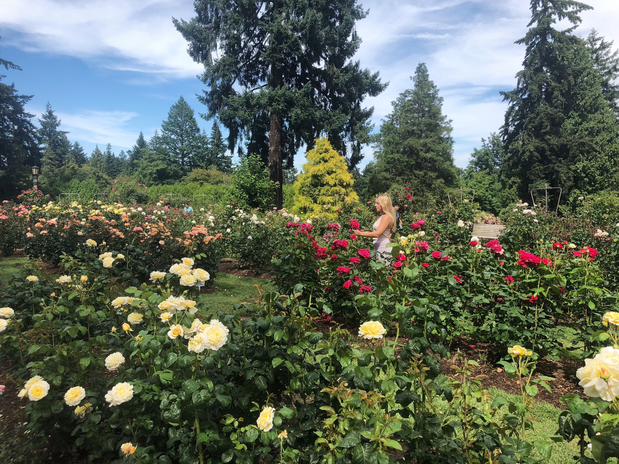 2. Rose Garden - In the middle of Portland is a huge, beautiful rose garden. Great place to just go and relax and get away from the city.