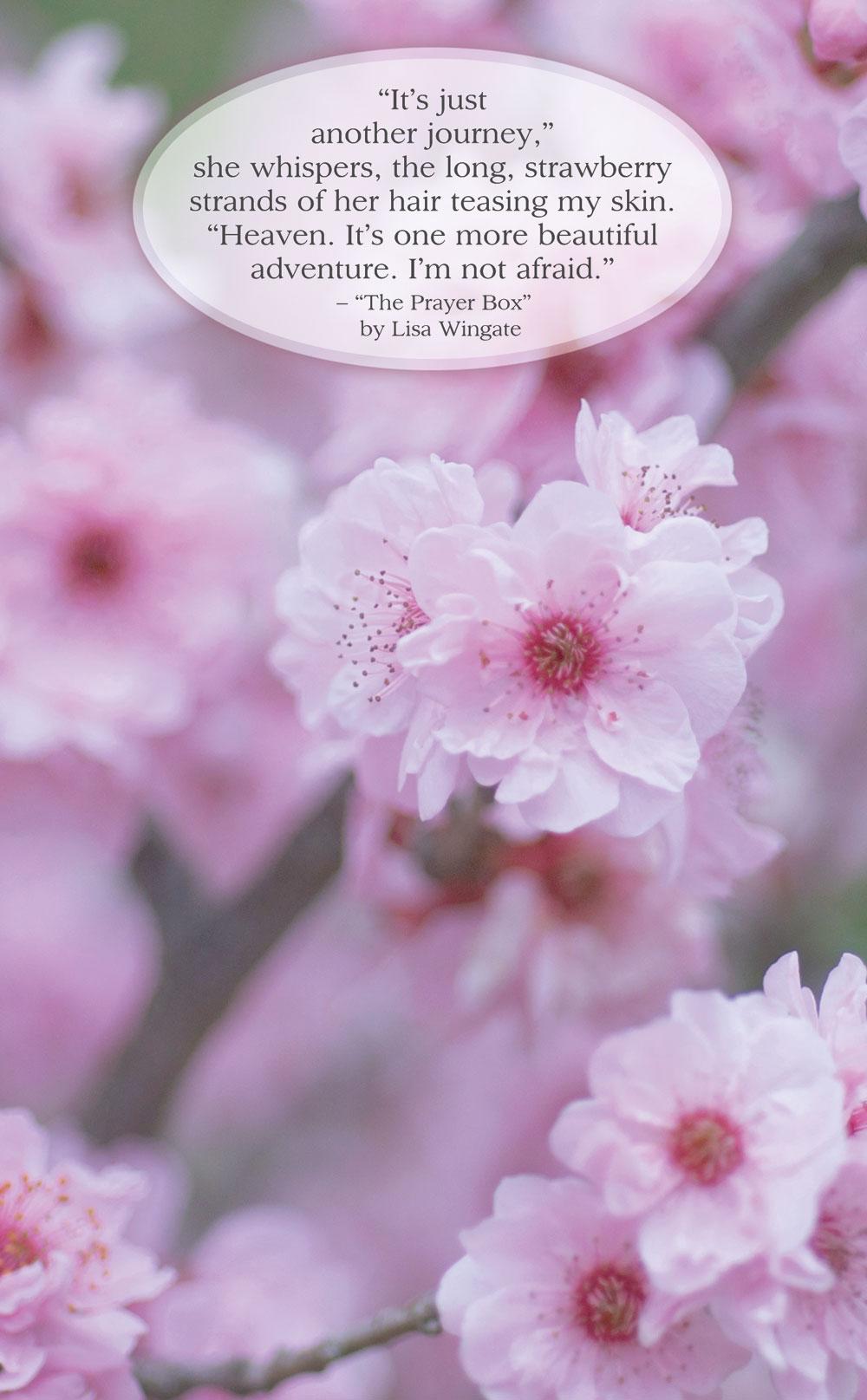 29135-SQC-FRT-pretty-in-pink.jpg