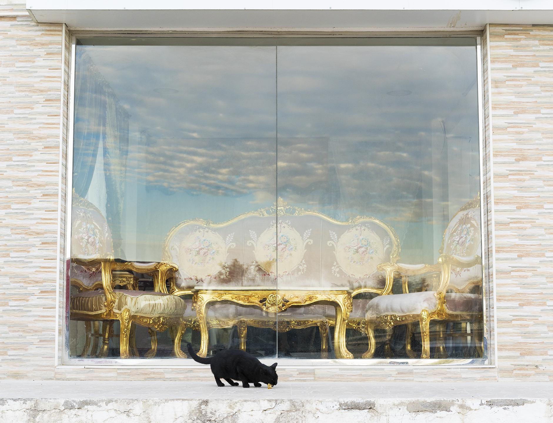 Farah Al Qasimi, Furniture Market, Stray Cat, 2018