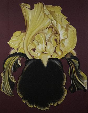 Lowell Nesbitt, Iris, 1971