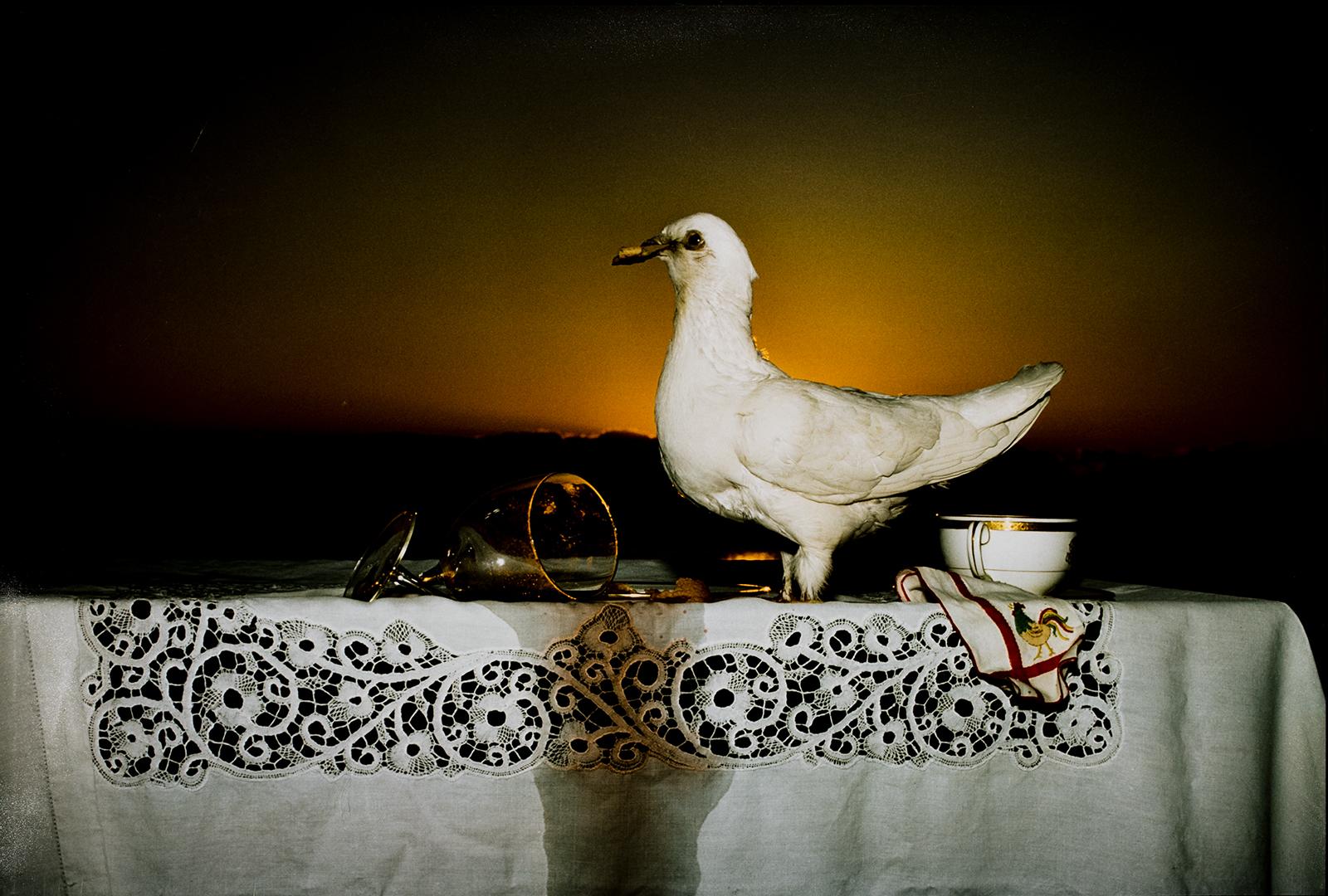 Barbara Norfleet, White Pigeon and Broken Wine Glass, 1986