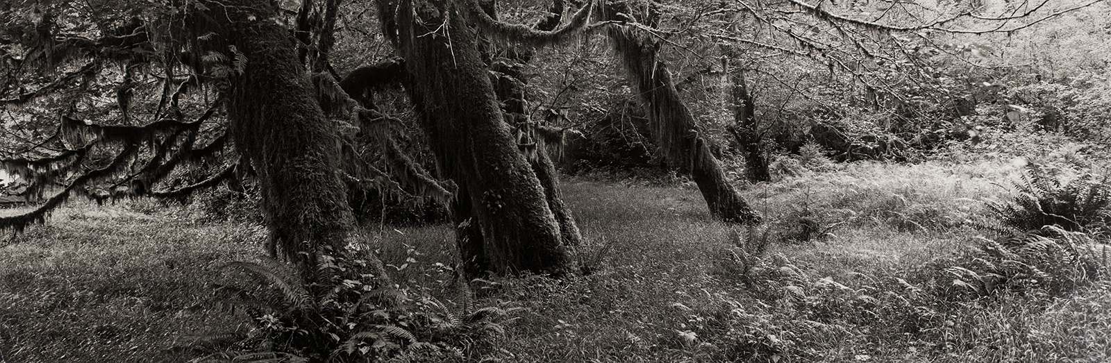 Mary Peck, South Fork, Hoh River Valley, Olympic Peninsula, Wash