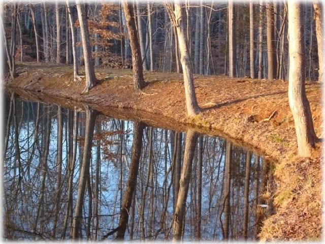 pond-trees-054.jpg