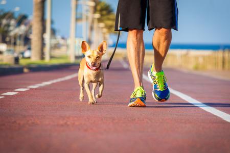 40982344_S_Dog_track_running_Pet_walking_Jogging.jpg