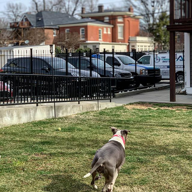 Did you know that we're both dog friendly AND wheelchair / buggy friendly? We take #accessible to another level! 🙏🏼👌🏽❤️ #WeWalkTheTalk #LiveTheYesLife #YesApproved [ @YesWorking at 965Baxter.com ] #YesLouisville | #InspireTheCity | #Louisville | #ShareLouisville | #LouisvilleKY | #LouisvilleLove | #LocalLouisville | #BeBetter | #LoveLouisville
