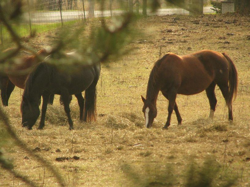 Horses - Fall 2009