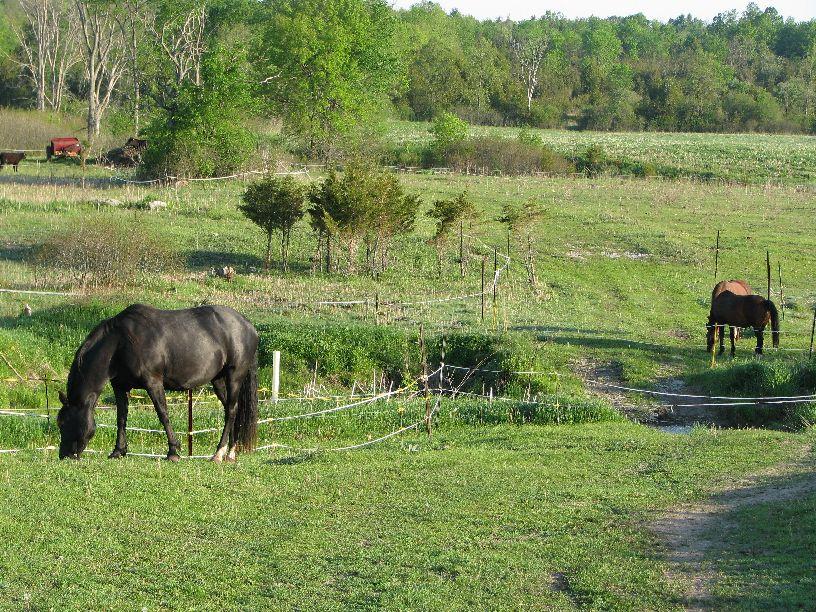 20100520 Evening pasture