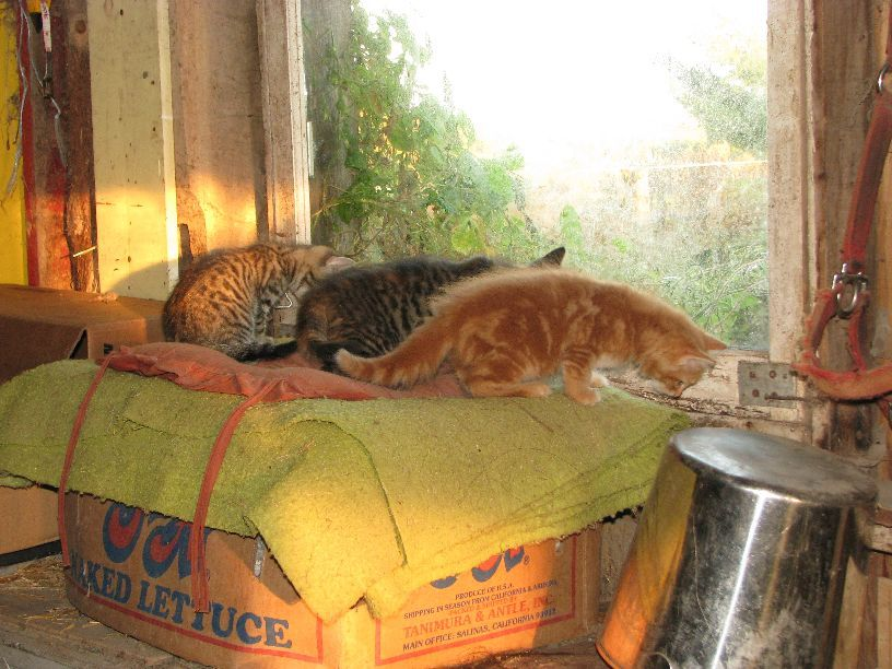 20110924 three little kittens