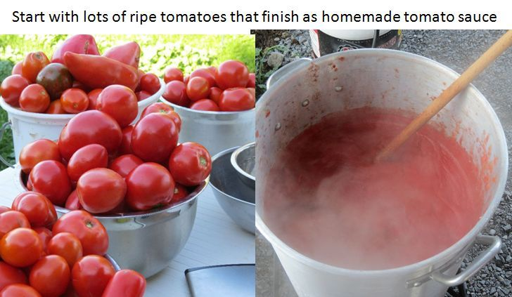 tomatoes to sauce