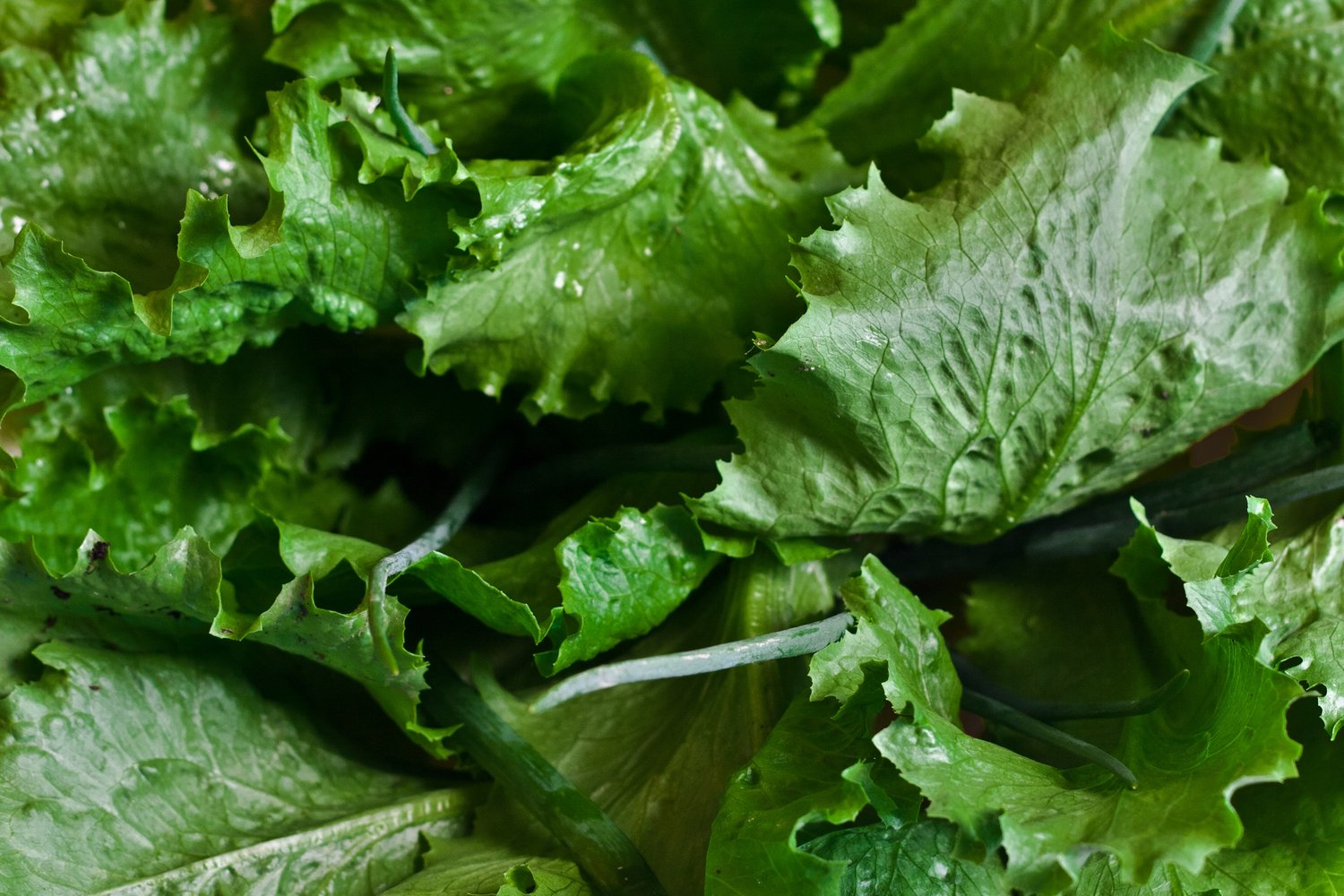 healthy-lettuce-salad-5604.jpg