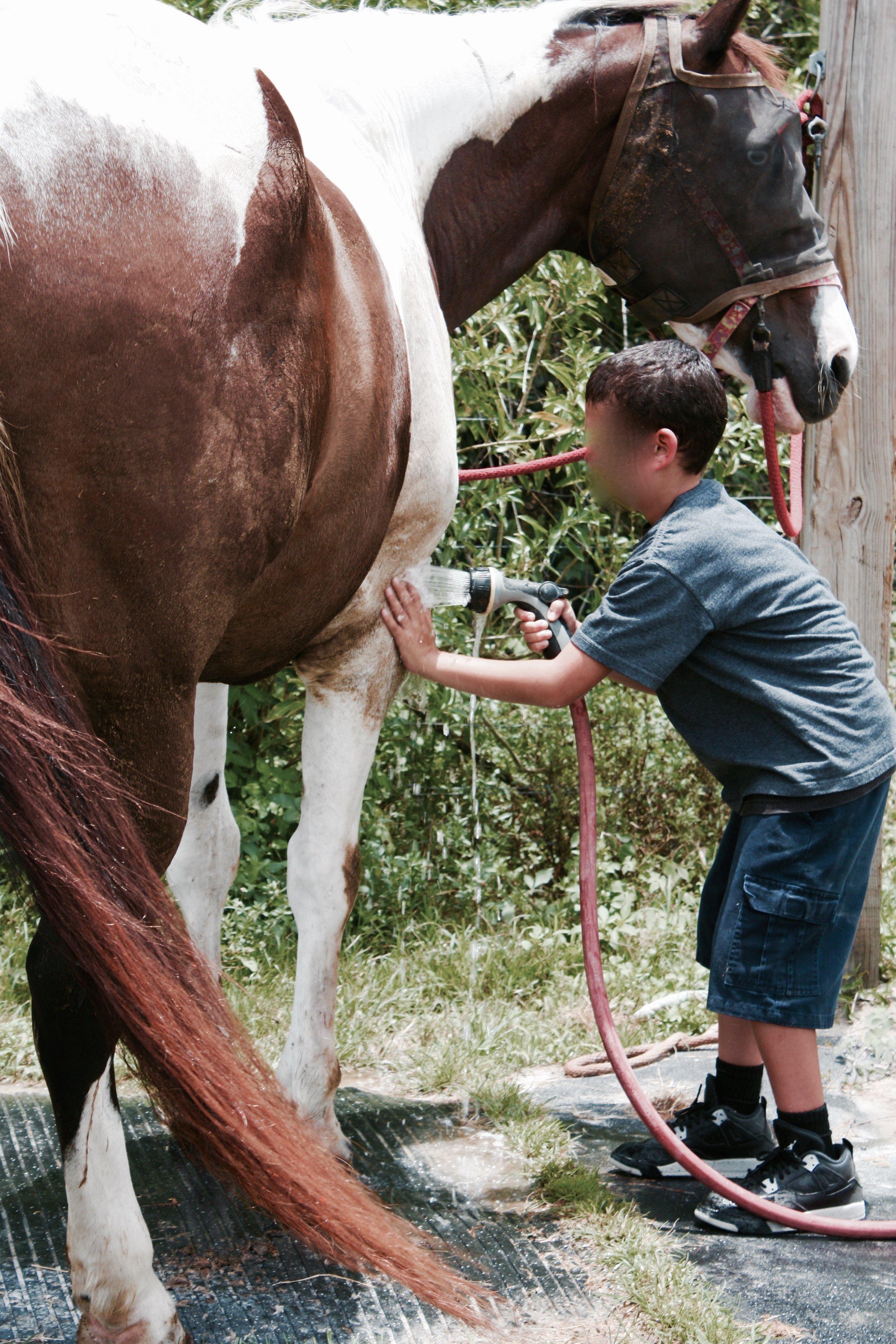 Purple Moose Camp goes to F.R.I.E.N.D.S. Horse Sanctuary Summer 2015