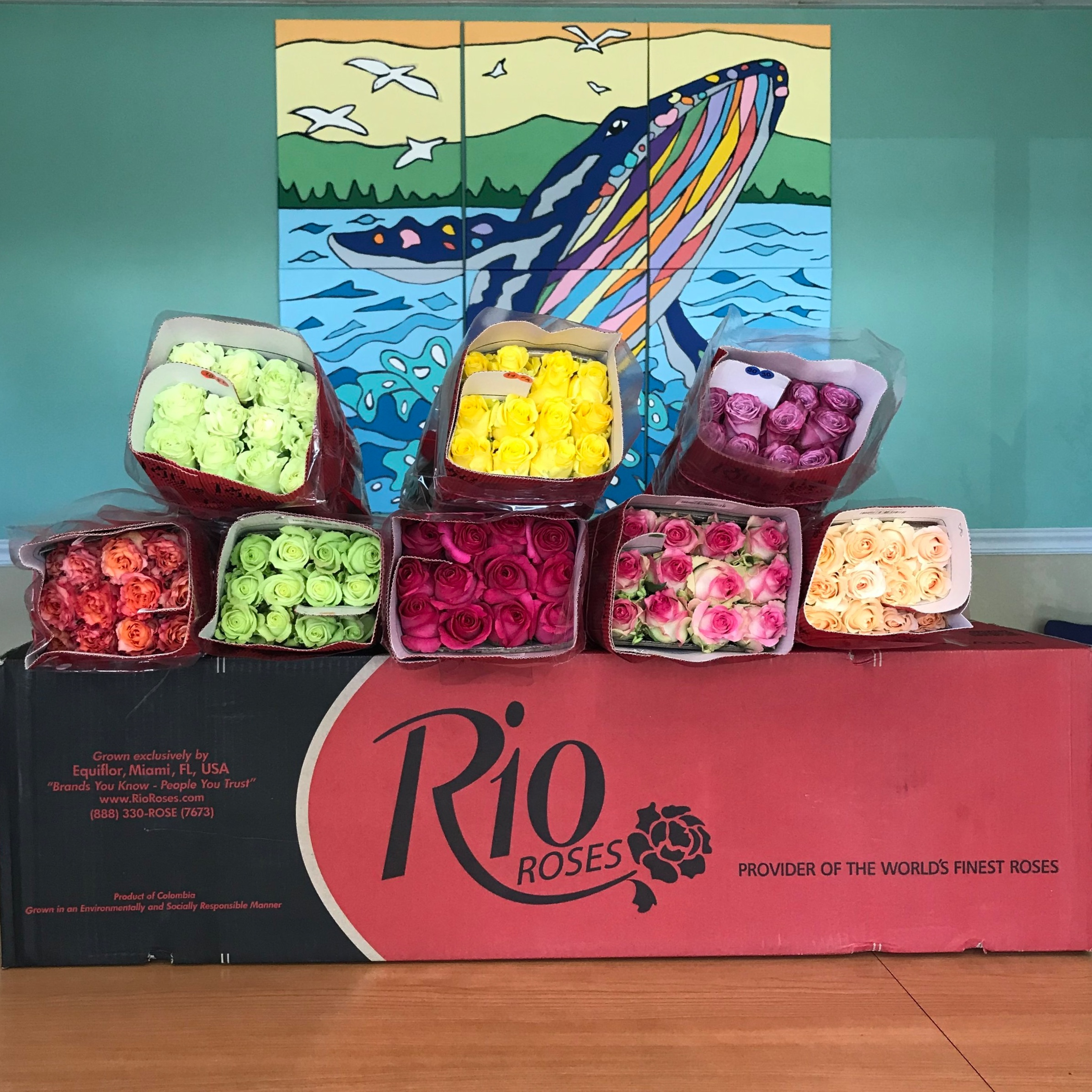 Rio Roses donates over 200 roses to the women of The Lodge for Valentine's Day