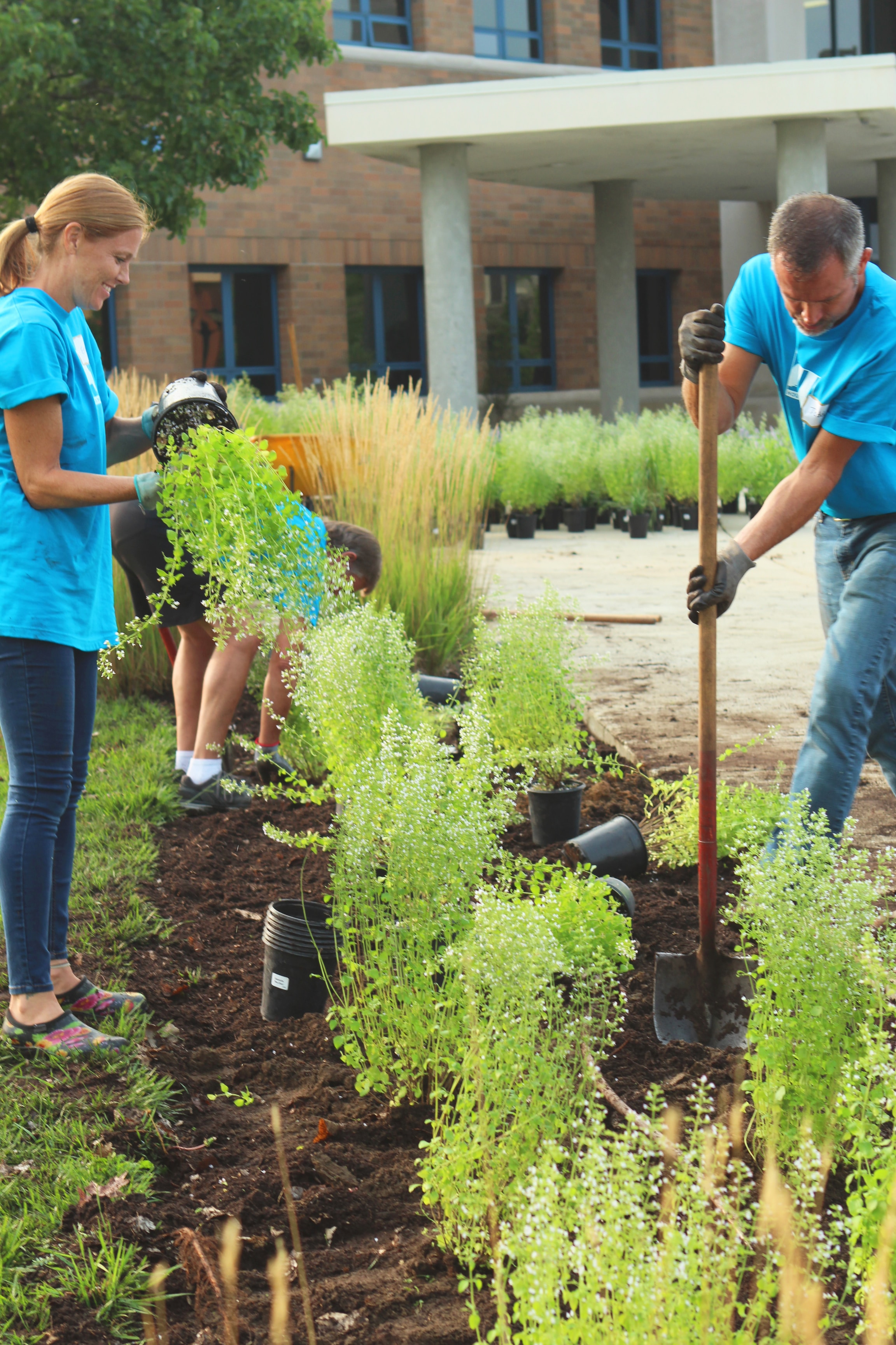 male and female volunteers planting ferns