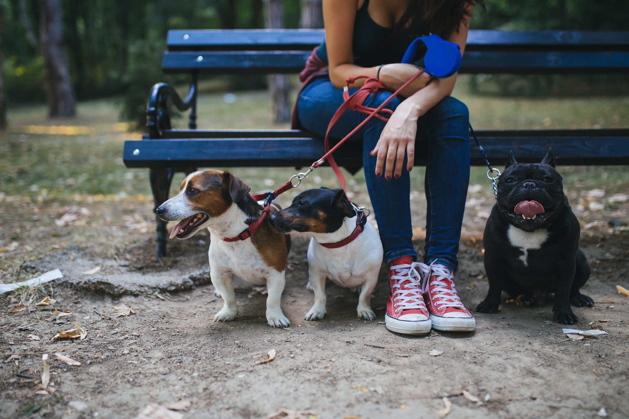 woman on park bench with three leashed dogs