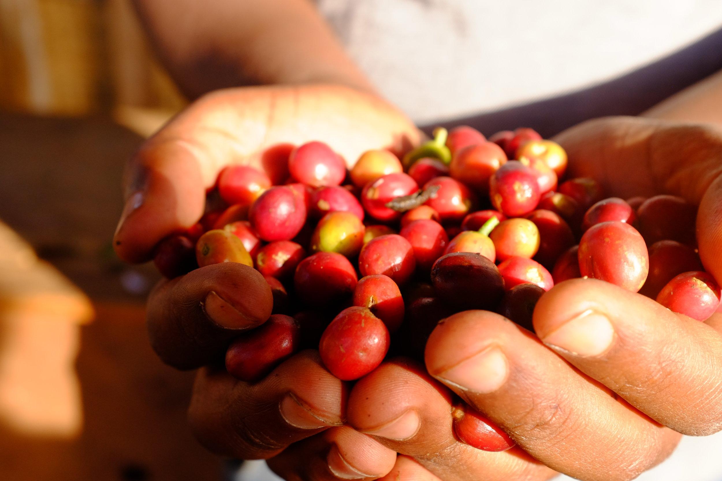 cherries 2.jpg