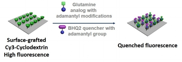 The assay for glutamine uptake.