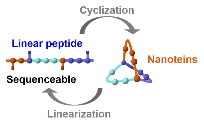 fold nanotein.jpg