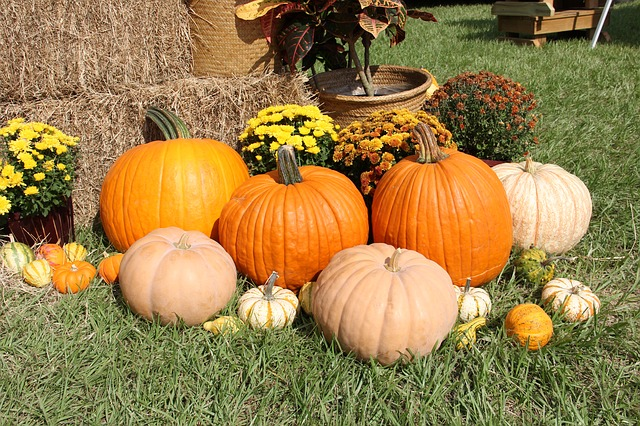 Thanksgiving pumpkins and squash on grassy field