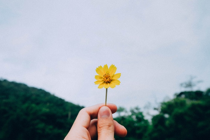 small-yellow-flower.jpg