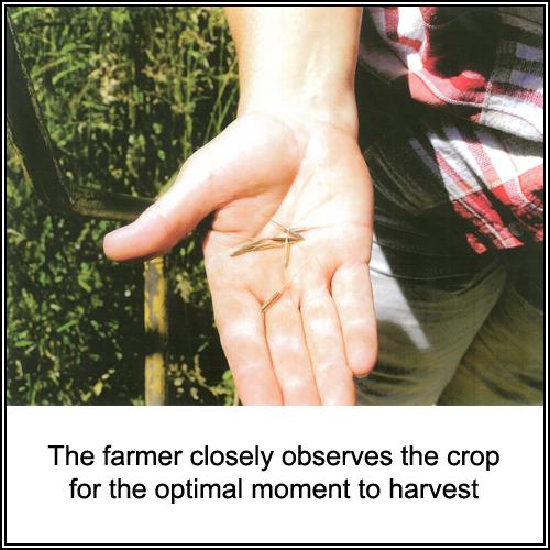 farming_003_text.jpg
