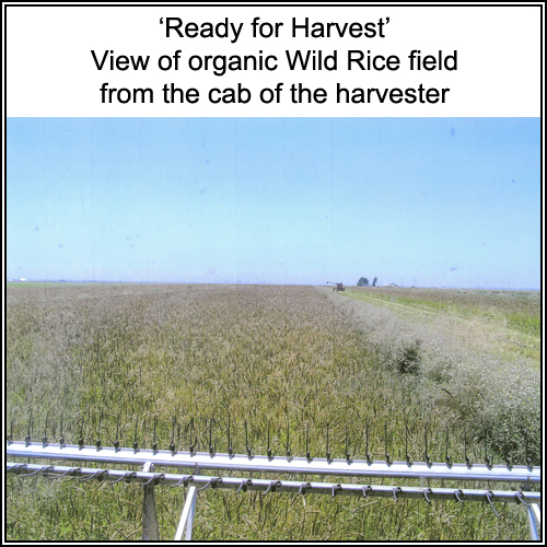 farming_004_text.jpg
