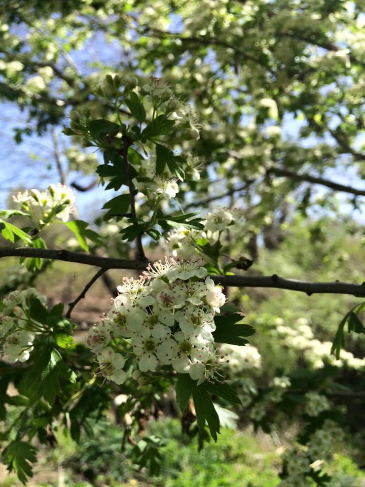 ilkbahar.jpg