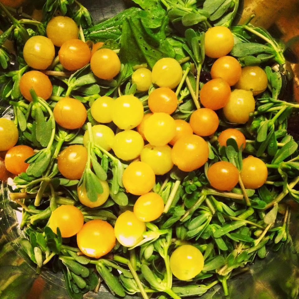 yabani domateslerimiz.jpg