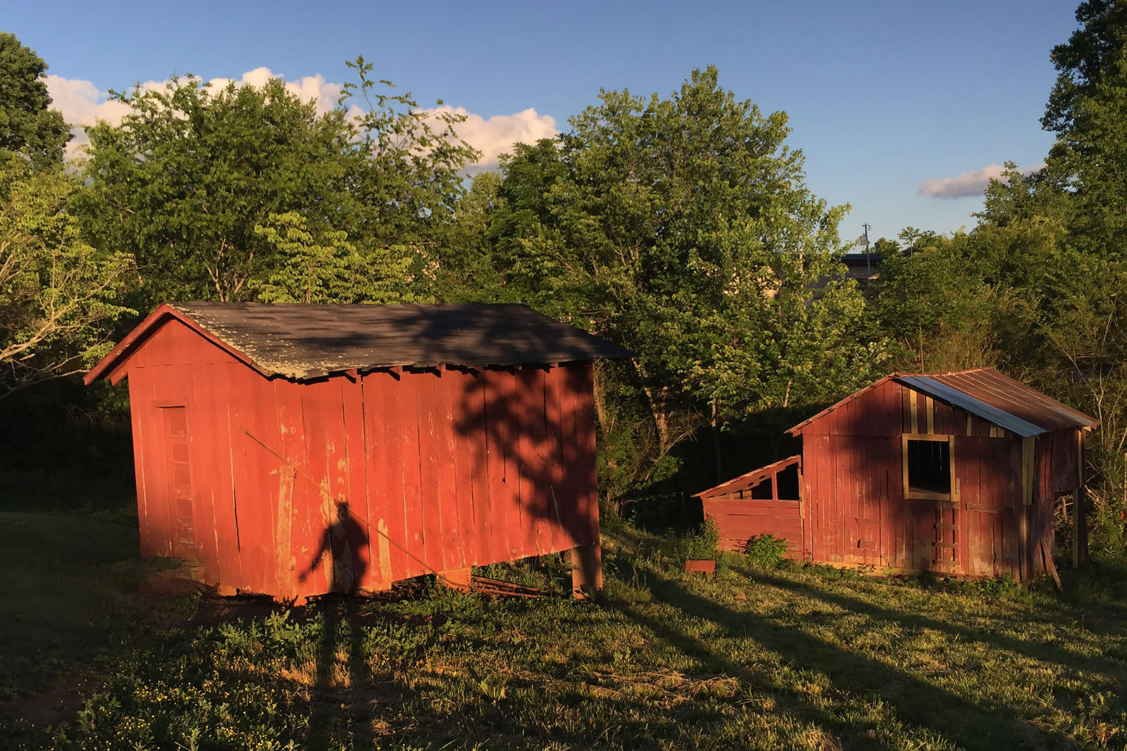 Weeds, stray cats and shadows visit my grandparent's barn more often than people. At one point four horses lived in these stalls and my pap-paw named them Ted, Molly, Rex and Jim Bob.  Molly was spotted. Ted was tan. Rex looked like Jim Bob, brown with a white stripe on his nose.