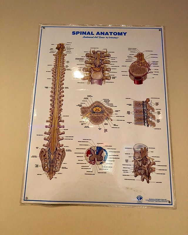 "The Spinal Anatomy is interesting to me.. As said from the books📚👉 ""The normal anatomy of the spine is usually described by dividing up the spine into three major sections: the cervical, the thoracic, and the lumbar spine. (Below the lumbar spine is a bone called the sacrum, which is part of the pelvis). Each section is made up of individual bones, called vertebrae."" Any other spinal questions reach out to me directly! I would love to help you get better and treat any back injuries👨🏻‍⚕️ #ccinjurycolechiropractic #doctorcole  #businessmen #ccinjury #chiropractic #drcole #dr.cole #colechiropractic #accidents #chiro #chiropractictreatment #backtreatment #painrelief #backpain #insuranceforinjury #louisvillechiropractic #louisvillechiropractor #louisvillekentucky #louisvilleback #louisvillechiropracticcare #chiropracticcare"
