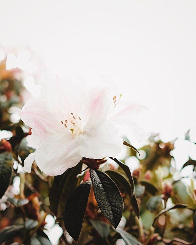 ~in bloom~
