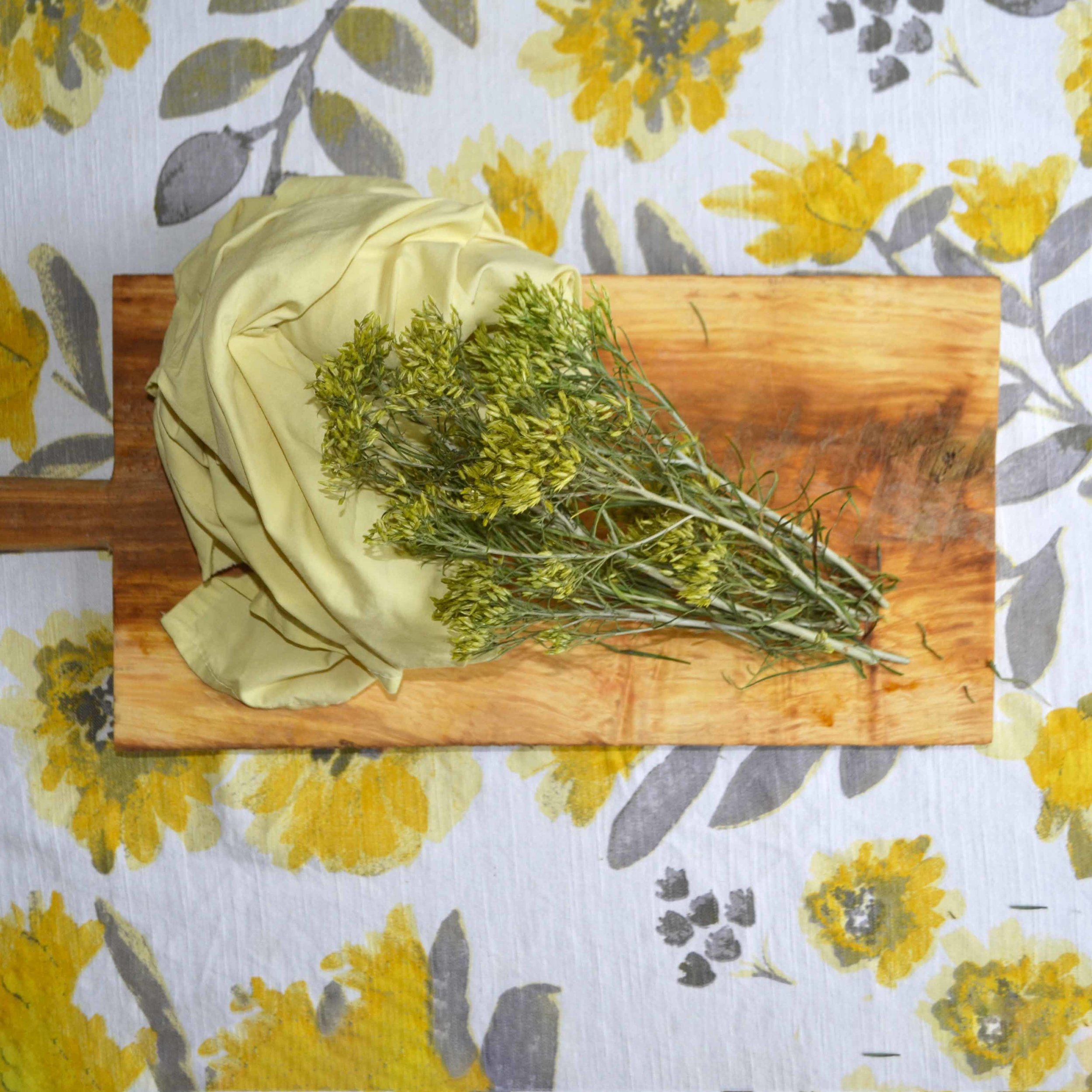 Natural Dyeing - Fabric dyed with rabbitbrush foraged from Colorado natural areas.