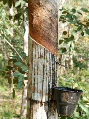 image courtesy Horana Plantations, Sri Lanka