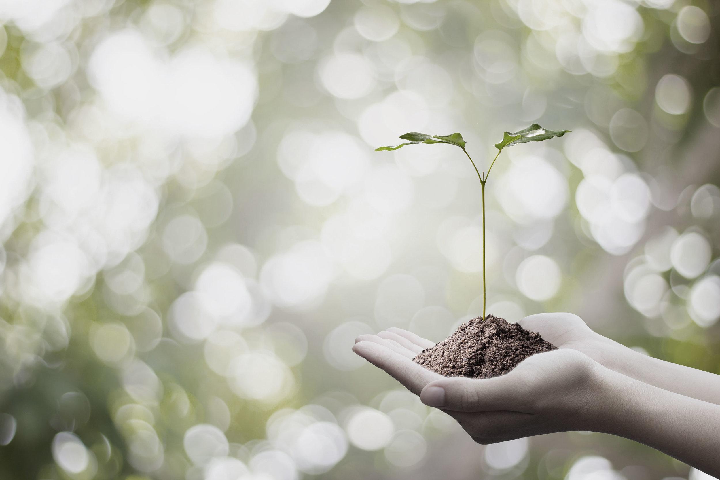 Sustainable_hand_singleflower.jpg